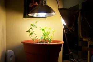 HPS Lights Home Depot Product