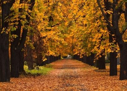 Best Favourite Fall Paint Colours Ideas