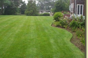Knowing Basic Lawn Maintenance Rules