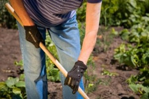 The List of Best Organic Fertilizer for Vegetables