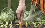<b>Best Organic Fertilizer for Vegetables</b>