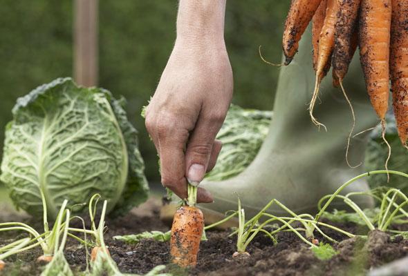 Use Best Organic Fertilizer for Vegetables