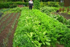 Best Organic Fertilizer for Vegetables Advantages