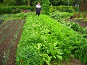 Best Organic Fertilizer for Vegetables Advantages