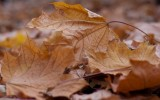 Dispose Fallen Leaves Advantages