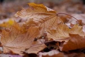 Dispose Fallen Leaves Advantages