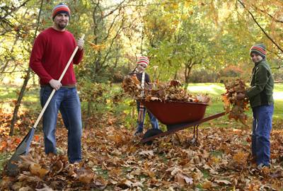 How to Dispose Fallen Leaves