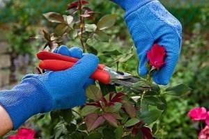Garden Tool Maintenance Rules