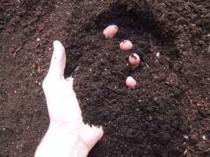 How to Sterilize Potting Soil Simply