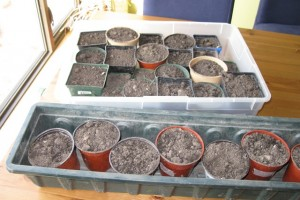 Guides of How to Sterilize Potting Soil