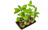 <b>How to Sterilize Potting Soil</b>