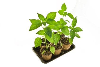 The Tips for How to Sterilize Potting Soil