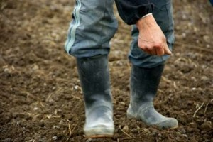 The Tips to Know the Soils of Your Garden