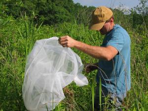 How to Make Natural Pesticides for Gardens