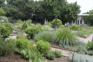 Natural Pesticides for Gardens Health