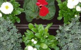 <b>Organic Pesticides for Gardens</b>