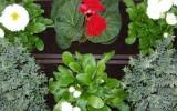 Organic Pesticides for Gardens Advantages