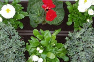 Organic Pesticides for Gardens Advantages