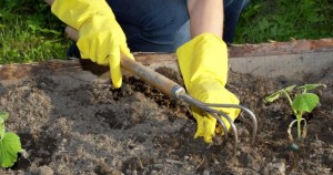 Sterilize Garden Soil Tips