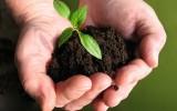 <b>Sterilize Garden Soil</b>