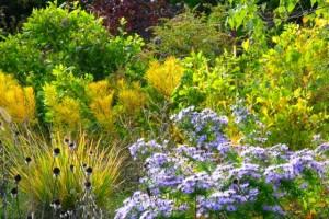 Get Aromatic Garden Solutions
