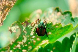 Garden Pest Control Methods Review