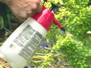Garden Pest Control Methods Understanding