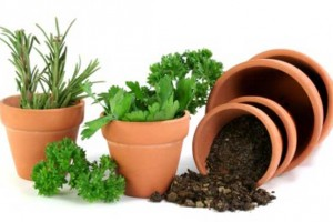 Herb Gardens in Pots Plans