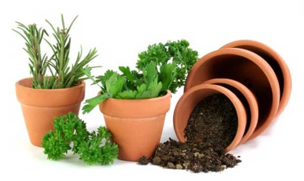 Herb Gardens in Pots Plans