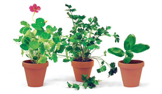 Herb Gardens in Pots Ideas