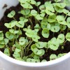 Herb Gardens in Pots Tips