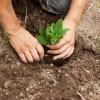 Organicgardening.com Website