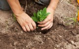 <b>Organicgardening.com</b>