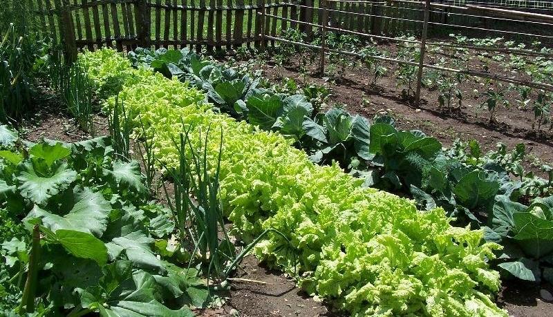 Visit Organicgardening.com