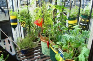 Find Organicgardening.com