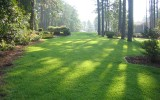 Get Basic Lawn Maintenance Rules