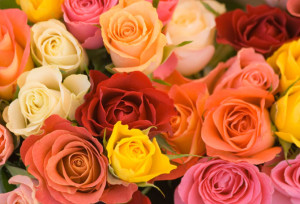 Ideas for Growing Roses from Seed