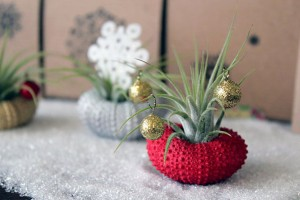 Holiday Plants  Interior Decorating