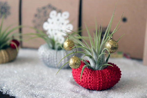 Holiday Plants  Interior Decorating