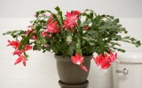 <b>Easy Maintenance Holiday Plants</b>