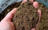 <b>Testing Soil In Your Garden</b>