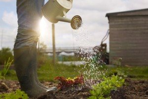 Know the Soils of Your Garden Ideas
