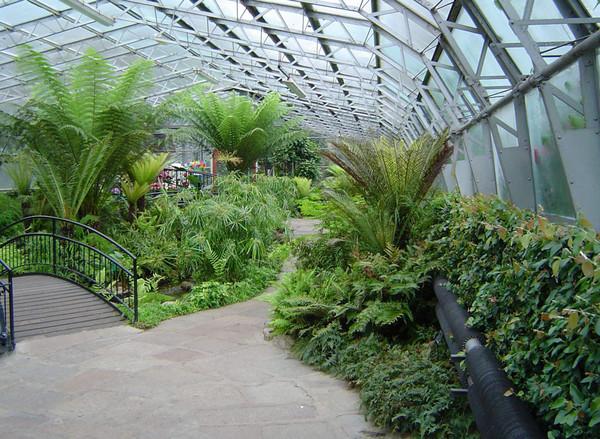 Best Winter Garden Benefits and Tips